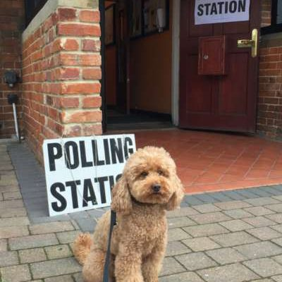 Dogs polling station